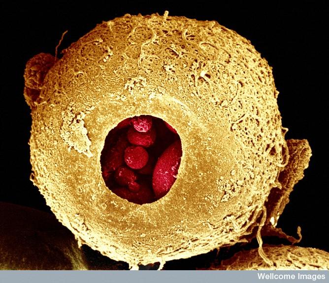 Astounding Microscopy Pics