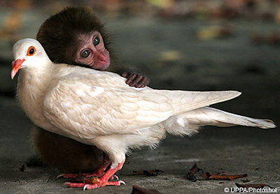 Baby Macaque Monkey and White Pigeon Find Each Other in Refuge in China