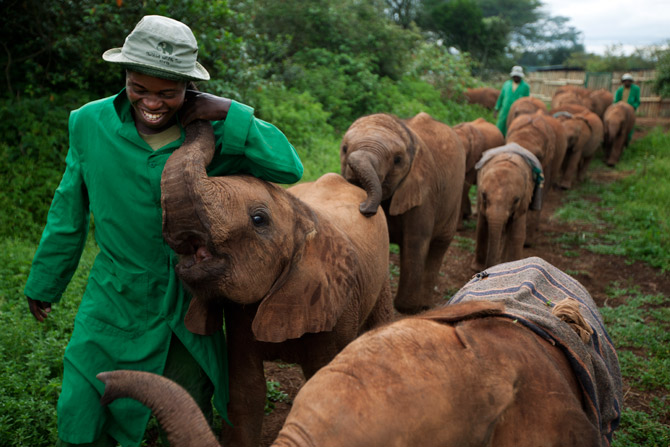 Little Orphaned Baby Elephants